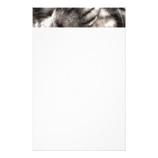 tabby-114782 tabby cat close up portrait feline an stationery paper