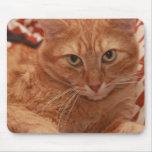 Tabby anaranjado alfombrilla de raton