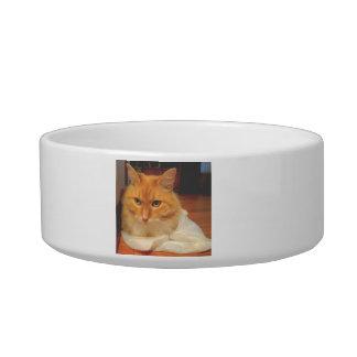 Tabby anaranjado boles para gatos