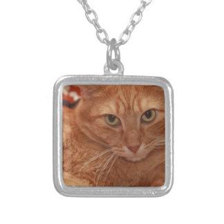 Tabby anaranjado collar personalizado