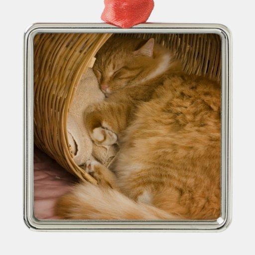 Tabby anaranjado que duerme en cesto adorno cuadrado plateado