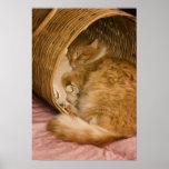 Tabby anaranjado que duerme en cesto póster