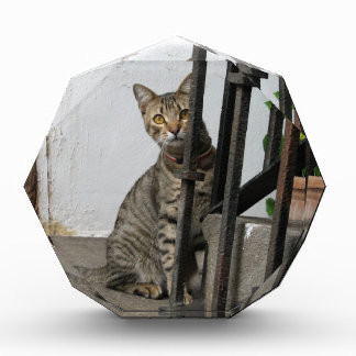 Tabby Cat Award