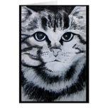Tabby Cat Cards