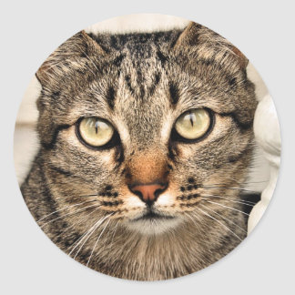 Tabby Cat Classic Round Sticker