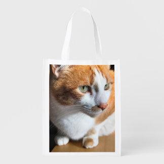 Tabby cat closeup grocery bag