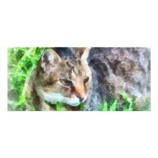 Tabby Cat Closeup Rack Card