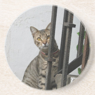Tabby Cat Drink Coaster