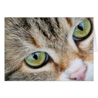 Tabby Cat Eyes Looking At You Card