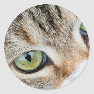 Tabby Cat Eyes Looking At You Classic Round Sticker