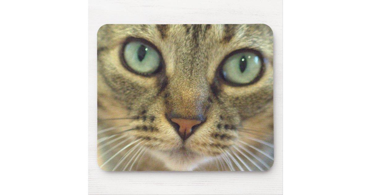 Tabby Cat Face Close Up Mouse Pad Zazzle Com