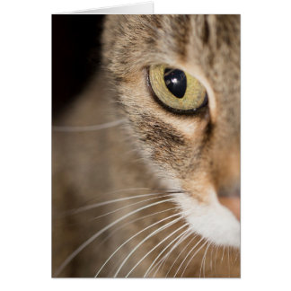 Tabby Cat Face Photo Greeting Card Blank
