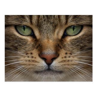 Tabby Cat Face Postcard