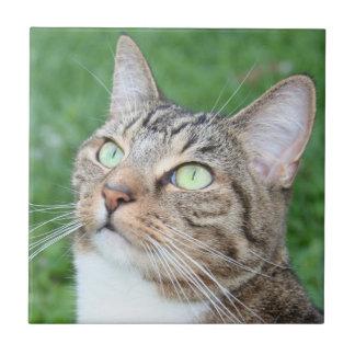 Tabby cat face tile