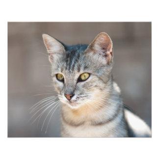 Tabby cat flyer