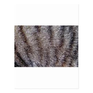 Tabby cat fur.jpg postcard