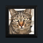 "Tabby Cat Gift Box<br><div class=""desc""></div>"