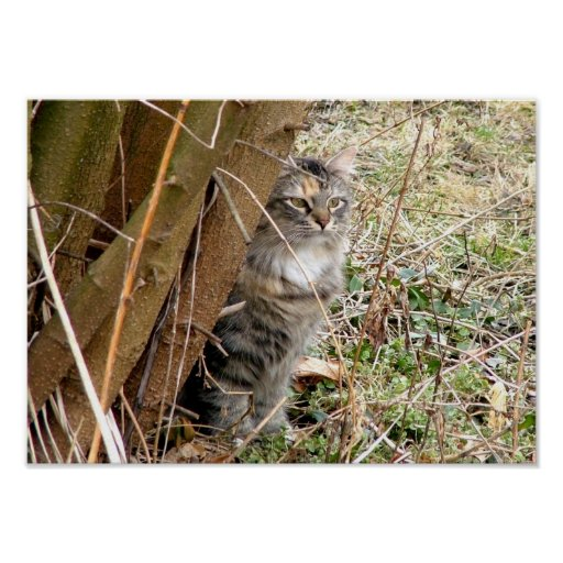 Tabby Cat Hiding Behind Tree Poster