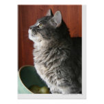 Tabby Cat in Profile Poster