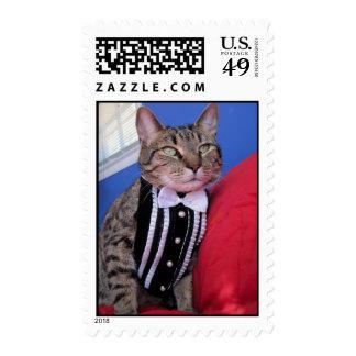 tabby cat in tuxedo postage stamp