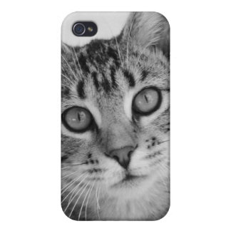Tabby Cat iPhone 4 Case