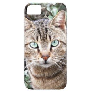 tabby cat iPhone 5 Case-Mate phone case