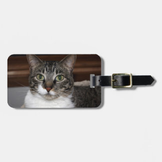 Tabby Cat Looking at You Bag Tag