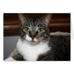 Tabby Cat Looking at You Blank-Inside Card