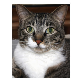 Tabby Cat Looking at You Letterhead
