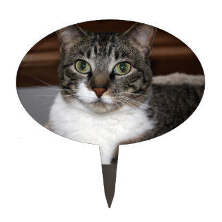 Tabby Cat Looking at You Photo Cake Topper