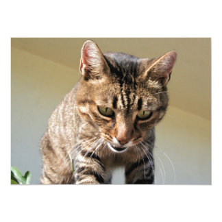 Tabby Cat Looking Down From A Height Card