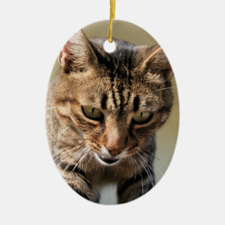 Tabby Cat Looking Down From A Height Ceramic Ornament