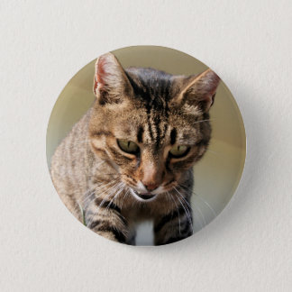 Tabby Cat Looking Down From A Height Pinback Button