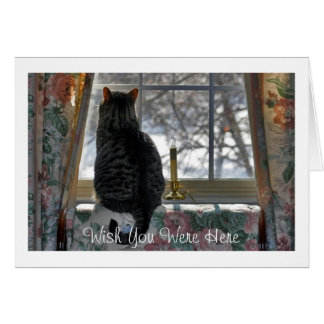 Tabby Cat Looking Out Window Card