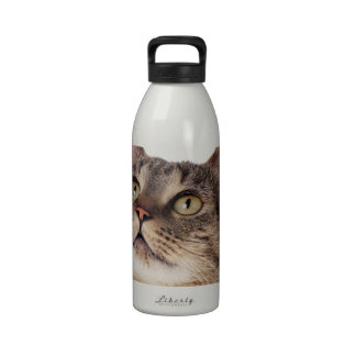 Tabby cat looking upward drinking bottle