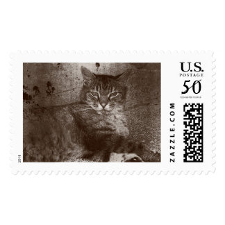Tabby Cat Lounging Outside, Grunge Postage