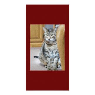 Tabby Cat Love Card