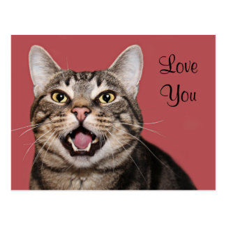 Tabby cat love postcard