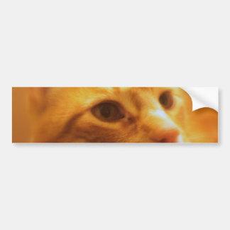 Tabby Cat Lovers Bumper Sticker
