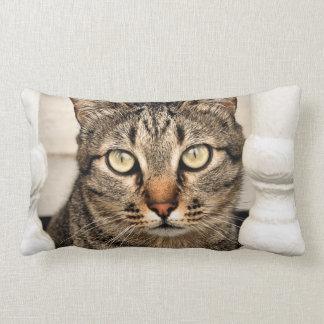 Tabby Cat Lumbar Pillow
