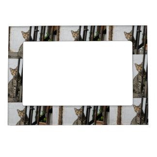 tabby cat magnetic frame