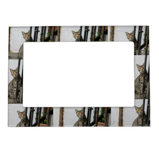 Tabby Cat Magnetic Picture Frames