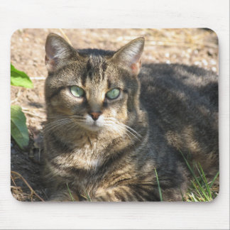 Tabby Cat. Mouse Pad