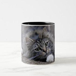 Tabby Cat on Altert Coffee Mug