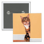 Tabby cat peeking around wall pinback button