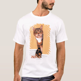 Tabby cat peeking around wall T-Shirt