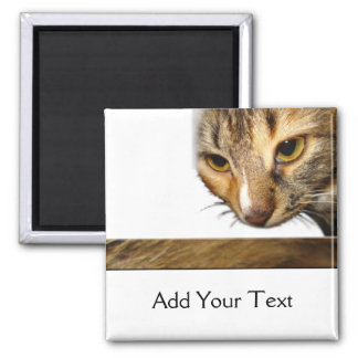 Tabby Cat Peeking from the Top Right Corner 2 Inch Square Magnet
