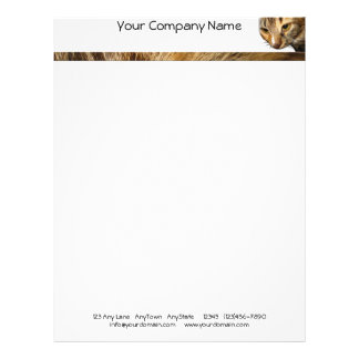 Tabby Cat Peeking from the Top Right Corner Letterhead