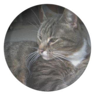 Tabby cat plate