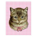 Tabby cat post card